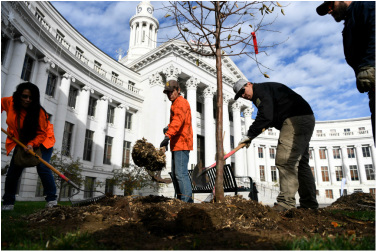 Image of four individuals planting a Tree outside a municipal building