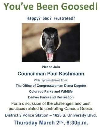 You've been goosed! Happy? Sad? Frustrated? Please Join Councilman Paul Kashmann with representatives from: The Office of Congresswoman Diana Degette, Colorado Parks and Wildlige, Denver Parks and Recreation. For a discussion of the challenges and best practices related to controlling Canada Geese. District 3 Police Station - 1625 S University Blvd. Thursday March 2nd, 6:30 pm. Image of a goose's head.